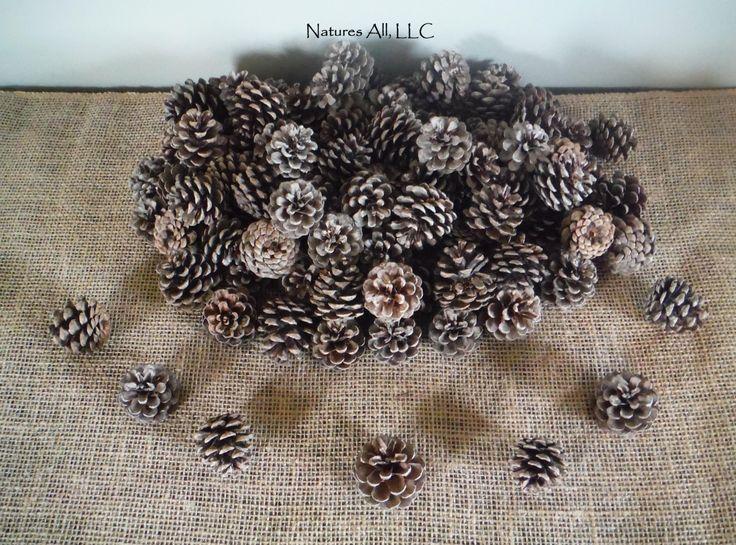 decorative pine pine cones80 piece boxfor rustic wedding u0026