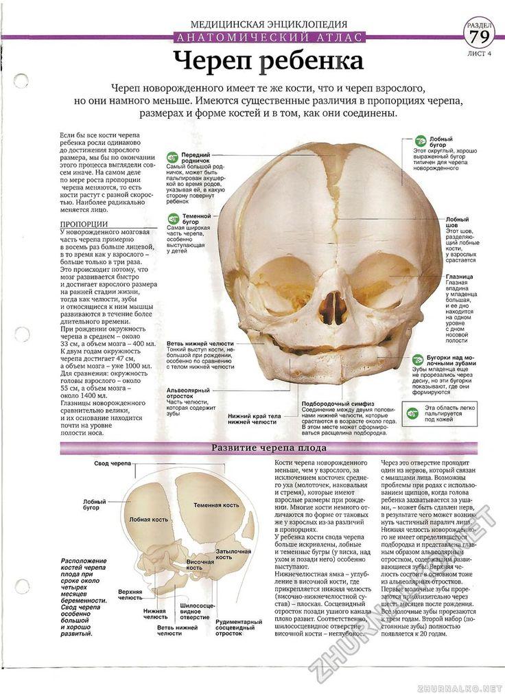 Тело человека №05, страница 17