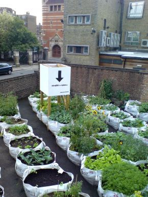 Great idea for paved vacant lots. Would love to visit this while in London- hope it's still going, post-installation.