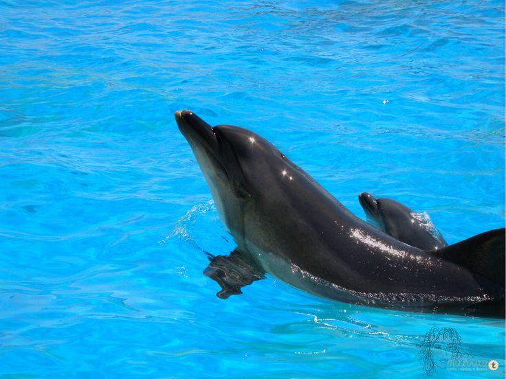 Από την επίδειξη με τα δελφίνια. Ήμασταν τυχεροί που είδαμε μαμά και παιδί σε μια και μοναδική βόλτα στην πιστίνα.