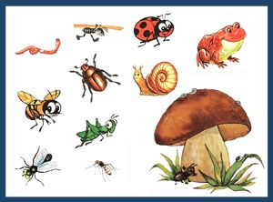 картинки для фланелеграфа к сказке грибок-теремок