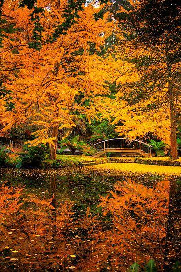 """The lake at *Alfred Nicholas Gardens* in autumn.""  [Alfred Nicholas Gardens, the Dandenongs, Victoria, Australia]~[Photographer Elana Bailey]'h4d'121010"