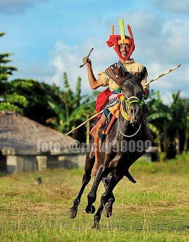 Pasola Warrior. A man ride his horse on the pasola festival in Sumba Island Indonesia.