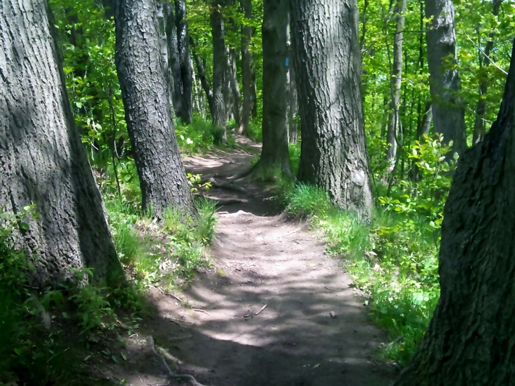 Nothing beats getting lost into one of the many forest trails in Hamilton, Ontario.
