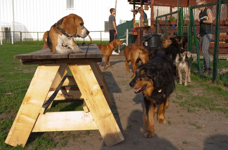 A beautiful afternoon in the dog school http://www.wuffcollars.com/en/blog/Beware_or_else-65
