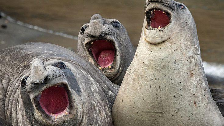 Webtekno ///  Gülme Garantili: Yılın En Komik 'Vahşi Yaşam' Kareleri Seçildi!