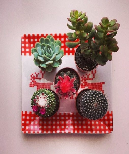 my cactus collection