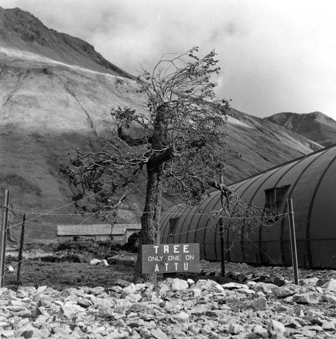 """Caption from LIFE. """"A fake tree built by the Army Engineers, Camouflage Division, on Attu Island."""" Aleutian Campaign, Alaska, 1943."""