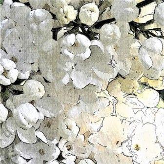 #bloemen #sering #kunstfotografie