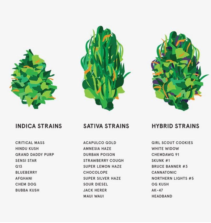 'MARY' Magazine Presents the Ultimate Guide to Weed Strains