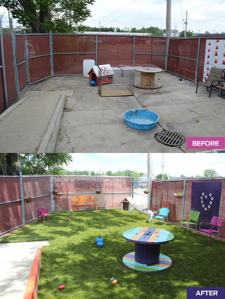 A group of 20 associates teamed up for this amazing makeover of Gateway Pet Guardians' play yard during our annual PetCare Pride Day. What a great space for great pups! #WeStandTaller #PurinaCares