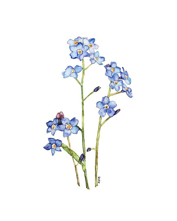 "Forget Me Not Painting - Print from my Original Watercolor Painting, ""Elaine"", Forget Me Not Flower, Blue Flower, Watercolor Flower, Flowers"