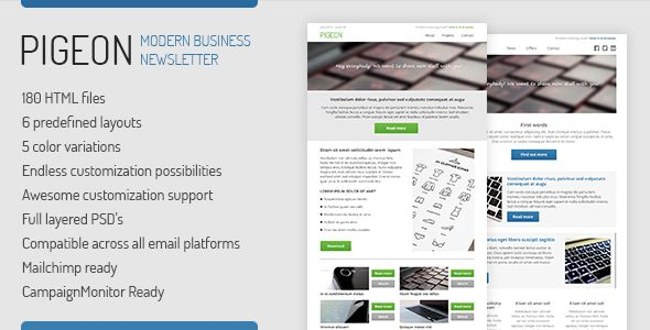 PIGEON - Business Email Template