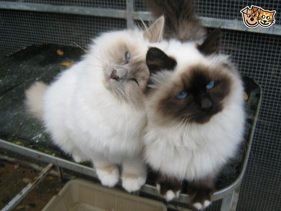 Young love!!!! Adorable!!!❤️❤️❤️ kitties!!!!!