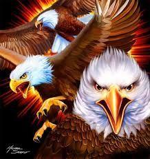 Afbeeldingsresultaat voor Native American eagles birds pics