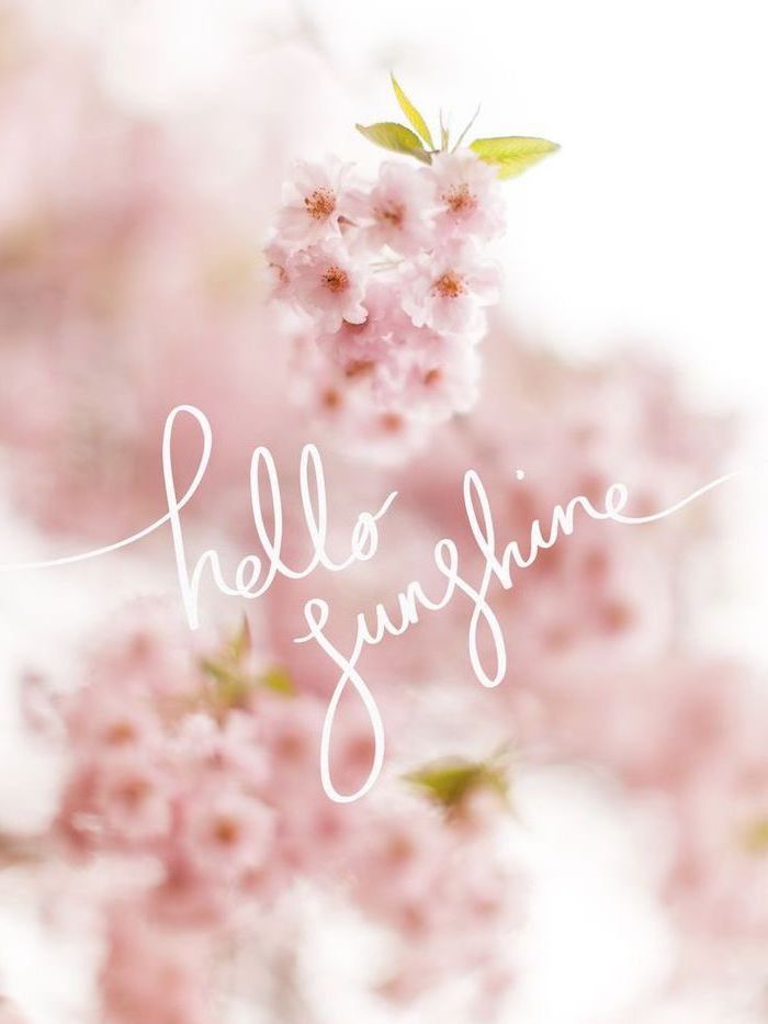 Hello Sunshine Pink Blooming Flowers Spring Wallpaper Hd Phone Wallpaper Hello Spring Wallpaper Spring Wallpaper Iphone Wallpaper