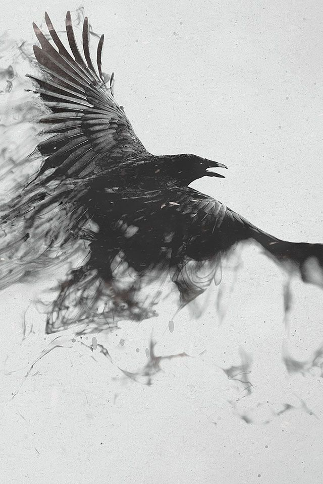 """""""Why do you follow me everywhere?"""" Yelled Rose. """"Because you need me. I was ordered to assist you until your ready."""" Replied the Raven. """"Fine, what is your name?"""" Asked Rose. """"You will find out soon enough."""" Replied the Raven."""