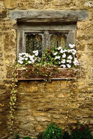 Overgrown Window from an English cottage. Beautiful and simple