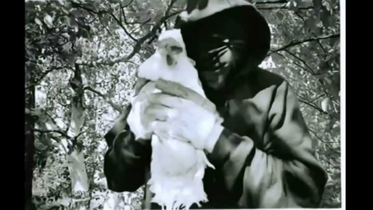 Animal Liberation Front : Gefallene Engel