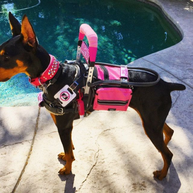 Best Mobility Service Dogs