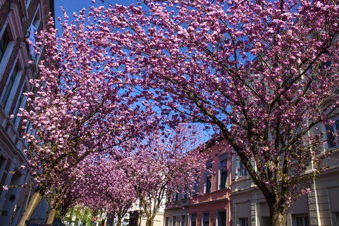 Le 10 destinazioni più colorate per la primavera da 23 euro