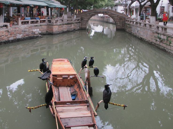 Domesticated osprey are used as tourist props in the old town of Tongli, China.