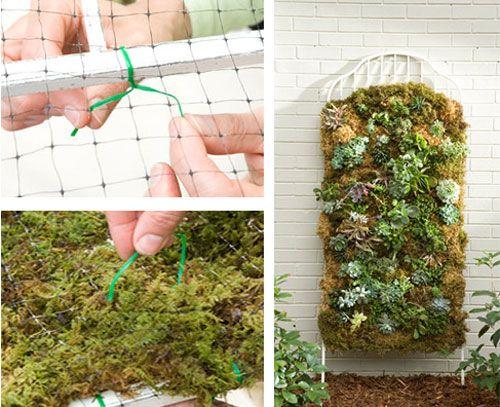 moss wall. Wall garden