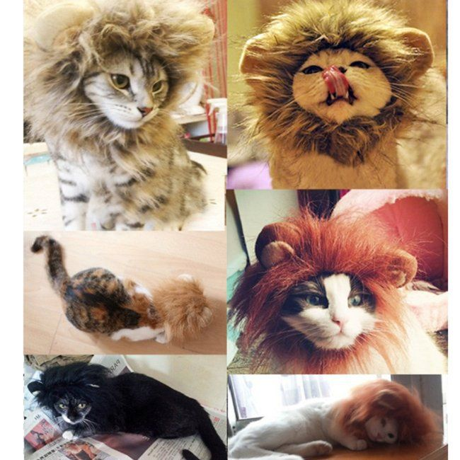 Cheap hat video, Buy Quality hat leopard directly from China hat islam Suppliers: Funny Cute Lion's Mane Cat Hat cat's toy like lion mane hat Stuffed Plush Toy Lion's Mane Hat for Cats YL672609