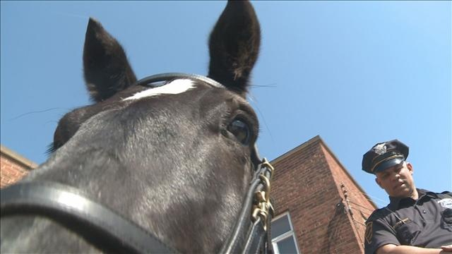One of Cleveland's four-legged finest from the Cleveland Police Department's mounted unit.  CPD announced they are looking to add 5 more #horses to the unit.  Go to http://www.wkyc.com/news/photo-gallery.aspx?storyid=237239 to see more of the unit's horses.