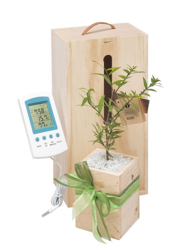 Weather station and living tree gift by Trees Please! delivered within NZ