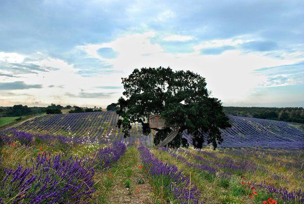 La casa sull'albero più grande d'Europa. Intervista a Renzo Stucchi dell'Agriturismo La Piantata.