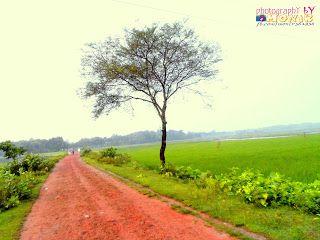 My Photograpgy: Acacia tree (বাবলা গাছ)