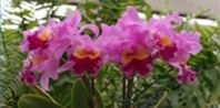 How to Make Orchid Food | eHow.com