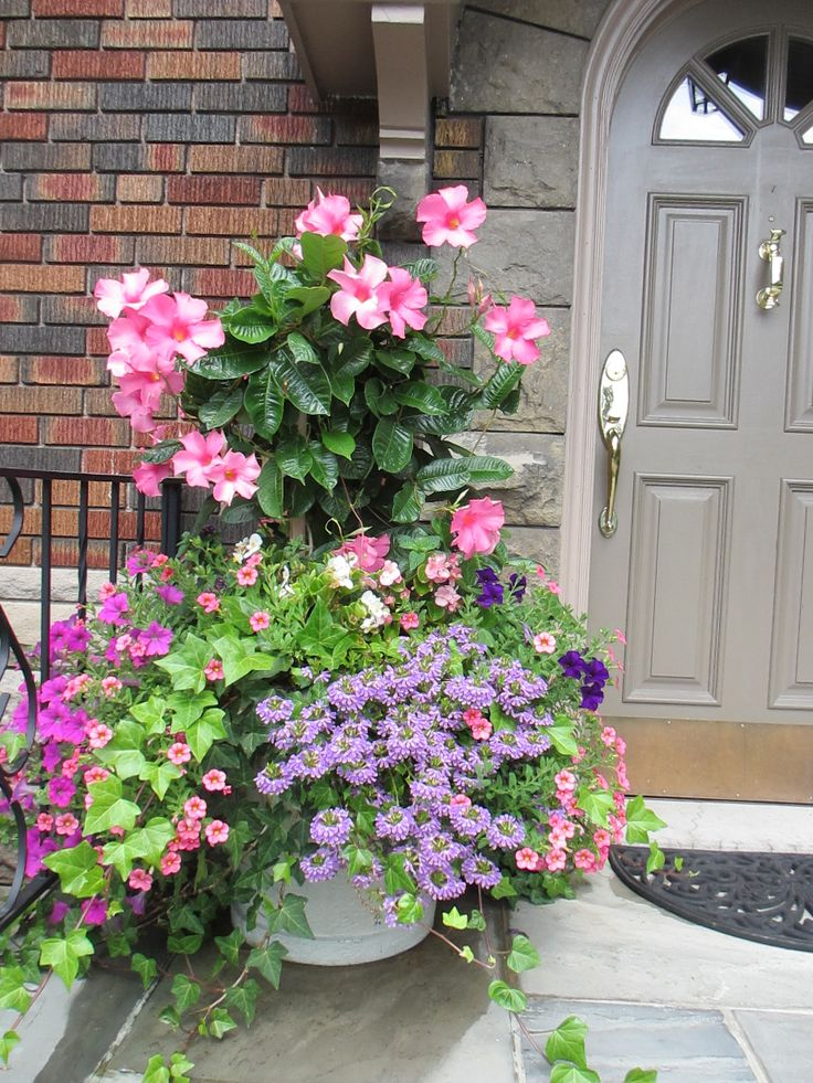 Summer container with pink mandevilla, wave petunias, calibracoa and purple scaveola