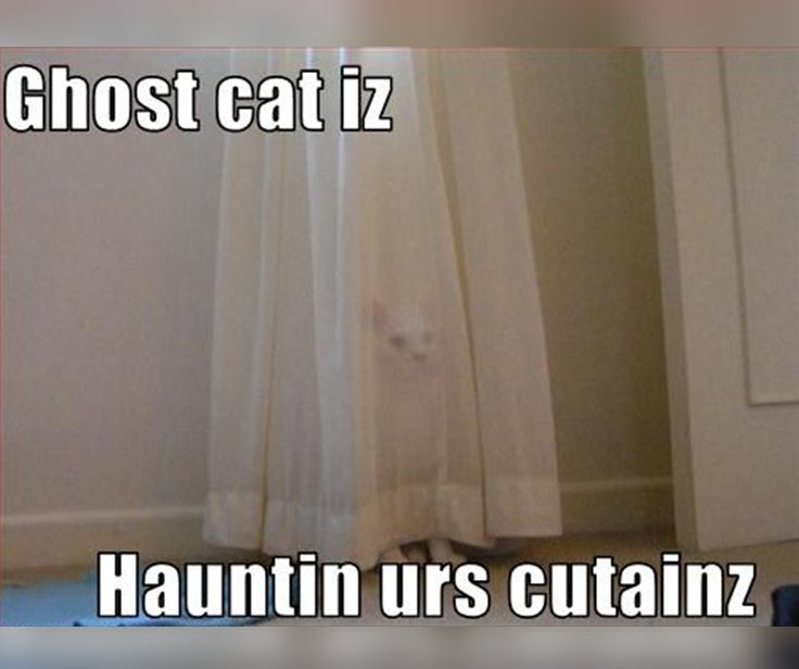 Ghost cat iz hauntin urs curtainz. #FridayFunny #Kommaweer