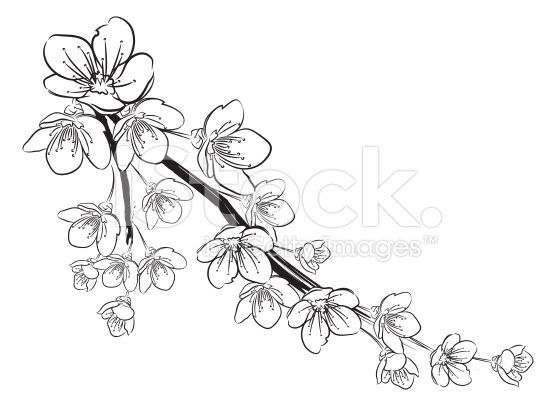 stock-illustration-35341962-cherry-blossoms-black-and-white.jpg (556×406)