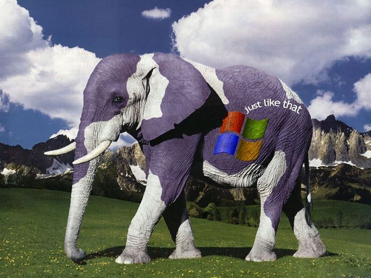 Awesome logo of Microsoft on elephant. Interesting to get your brand noticed by future customer. Know more about our logo promotion activities...