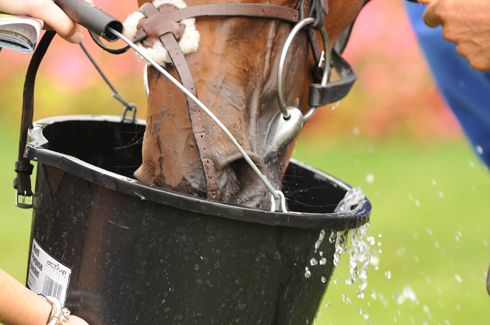 Horse health week: why electrolytes are vital for healthy horses