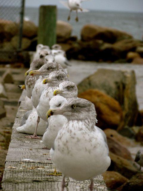 (via Cape Cod | Flickr - Photo Sharing!)