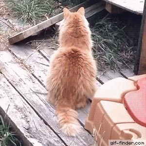 Drunk Cat   Gif Finder – Find and Share funny animated gifs