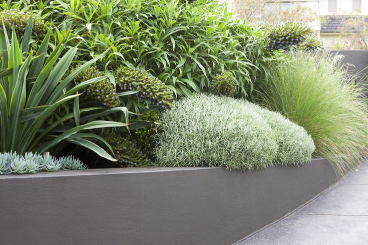 Sculptural Clouds ‹ Peter Fudge Pinned to Garden Design - Planting Schemes by Darin Bradbury.