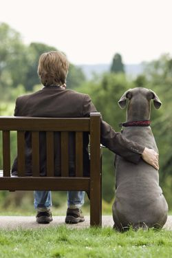 "How did dogs become ""man's best friend?"" Photo: Thinkstock"