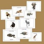 Recursos para el aula: Fichas de animales salvajes