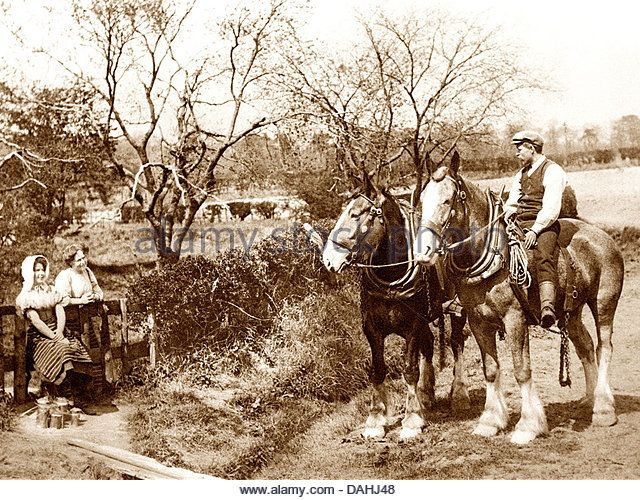 Shire Horses Victorian period - Stock Image