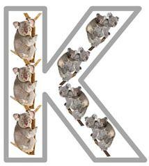 Kk is for KoalaAnimal Flashcards, Abc Animal, Koalas Kangaroos, Koalas Stuff, Education Fun, Kk Koalas, Learning, Koalas Pack, 1 1 1 1 Animal Abc