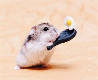 So cute hamster making an egg