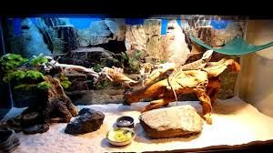 Image result for bearded dragon habitat suggestions