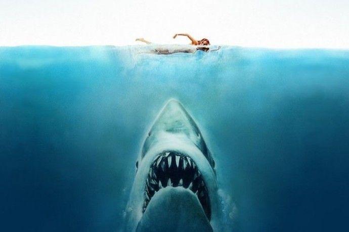 Τα δαγκώματα και οι επιθέσεις από καρχαρίες είχαν νέο ρεκόρ για το 2016.