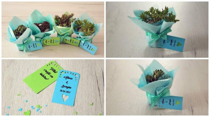 Wedding favors Succulent