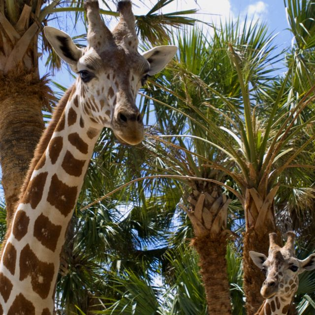 Naples Zoo at Caribbean Gardens in Naples FL is a Must Do Family Fun Activity when visiting the Paradise Coast.
